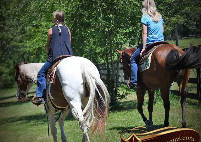 024-Cocoa-APHA-Sorrel-Tobiano-Roping-Team-heading-healing-beginner-horse-for-sale