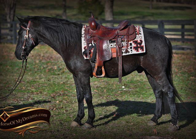 002-Teddy-Quarter=pony-for-sale-kid