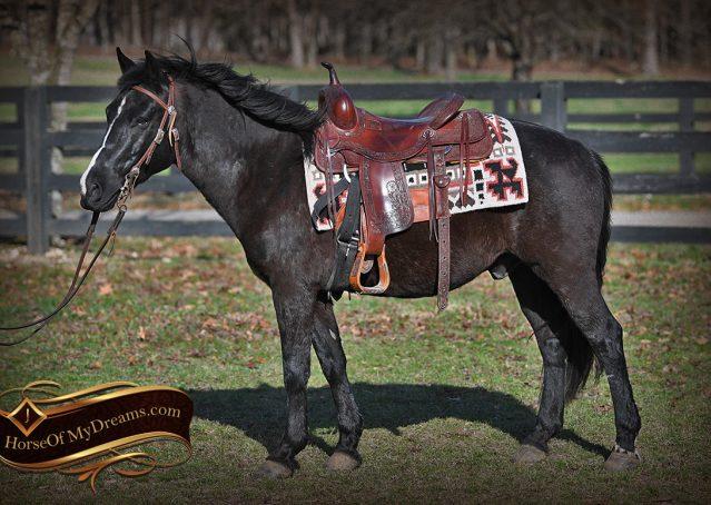 003-Teddy-Quarter=pony-for-sale-kid