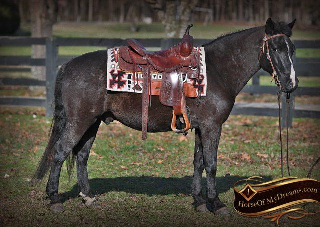 004-Teddy-Quarter=pony-for-sale-kid