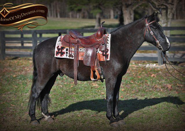 005-Teddy-Quarter=pony-for-sale-kid