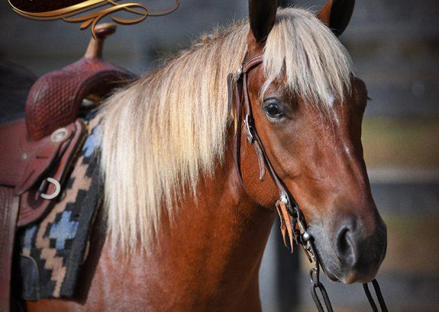 002-Copper-Chestnut-pony-Gelding