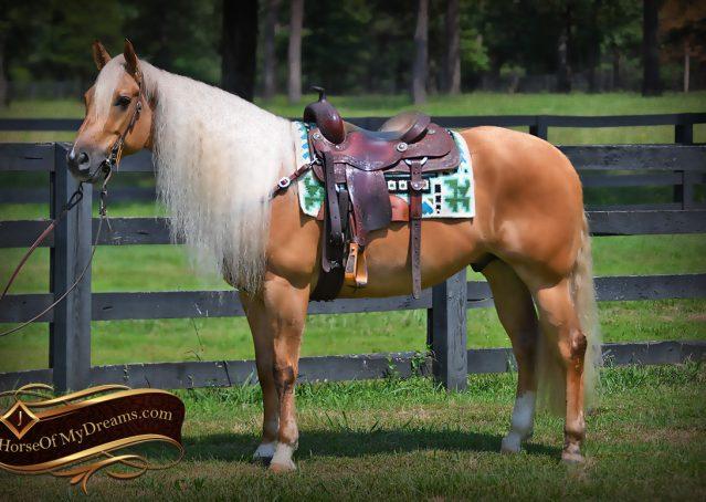 002-Tangle-Golden-Palomino-Flaxen-Blonde-Hollywoodstinseltown-reining-reiner-nrha-gelding-for-sale