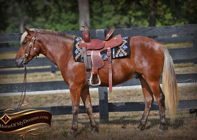 003-Copper-Chestnut-pony-Gelding