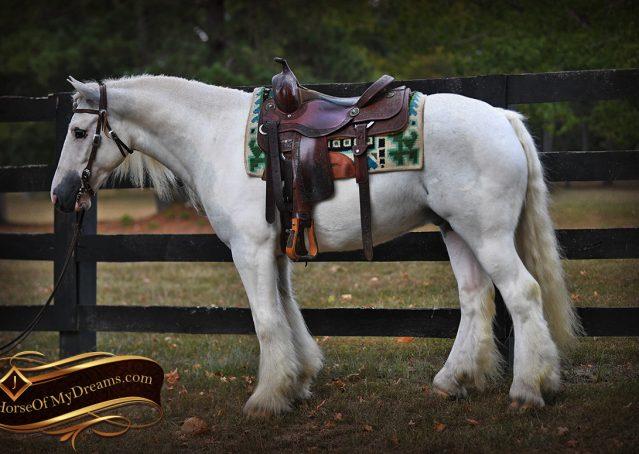 003-Jameson-Gray-white-gypsy-vanner-gelding-for-sale