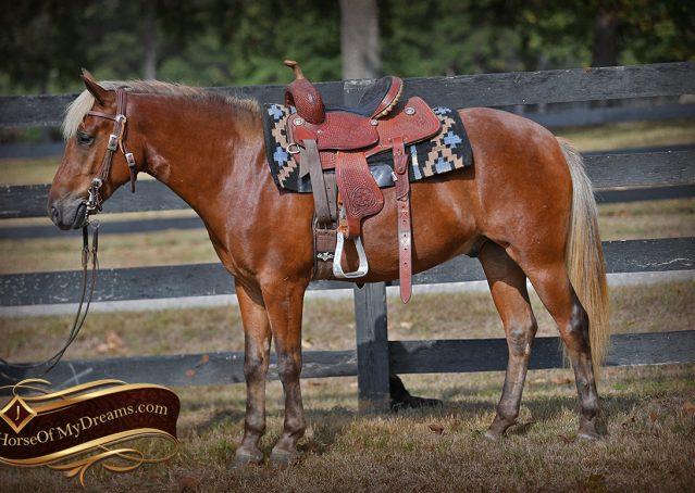 004-Copper-Chestnut-pony-Gelding