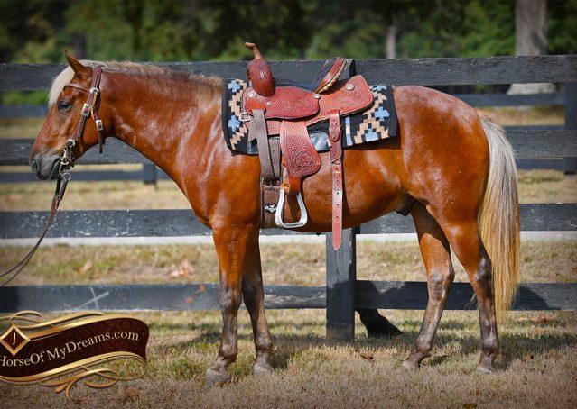 005-Copper-Chestnut-pony-Gelding