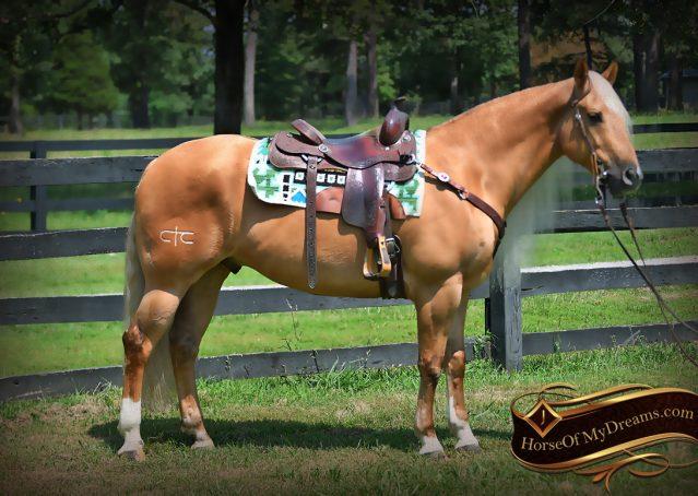 008-Tangle-Golden-Palomino-Flaxen-Blonde-Hollywoodstinseltown-reining-reiner-nrha-gelding-for-sale