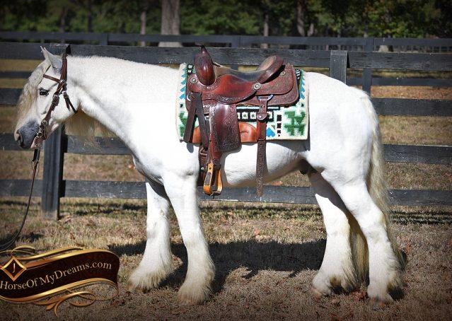 011-Jameson-Gray-white-gypsy-vanner-gelding-for-sale