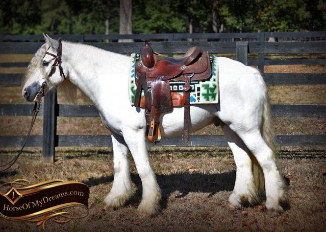 012-Jameson-Gray-white-gypsy-vanner-gelding-for-sale