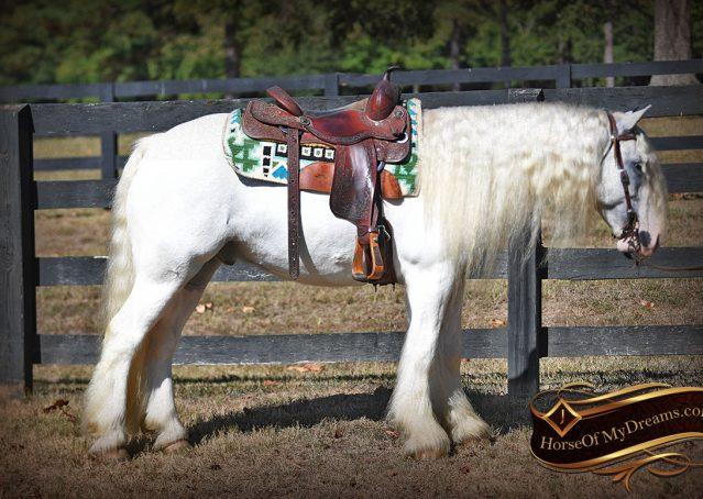 014-Jameson-Gray-white-gypsy-vanner-gelding-for-sale