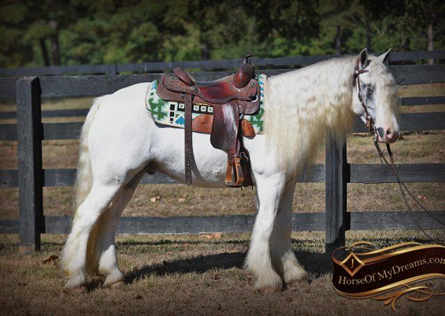 015-Jameson-Gray-white-gypsy-vanner-gelding-for-sale
