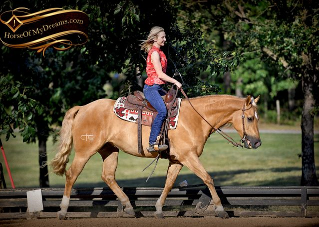015-Tangle-Golden-Palomino-Flaxen-Blonde-Hollywoodstinseltown-reining-reiner-nrha-gelding-for-sale