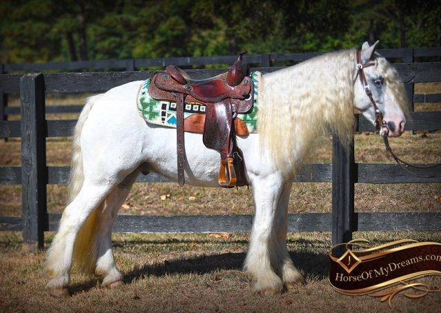 017-Jameson-Gray-white-gypsy-vanner-gelding-for-sale