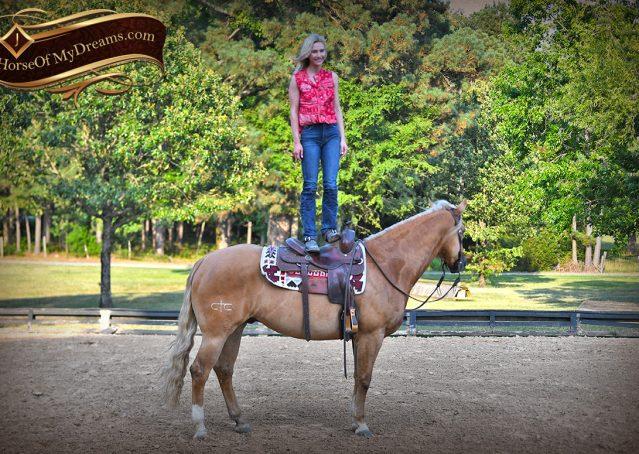 021-Tangle-Golden-Palomino-Flaxen-Blonde-Hollywoodstinseltown-reining-reiner-nrha-gelding-for-sale
