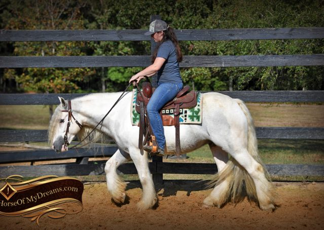 023-Jameson-Gray-white-gypsy-vanner-gelding-for-sale