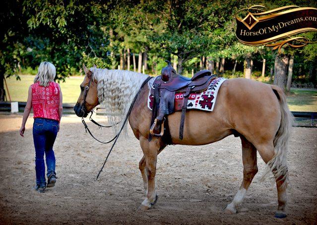 023-Tangle-Golden-Palomino-Flaxen-Blonde-Hollywoodstinseltown-reining-reiner-nrha-gelding-for-sale