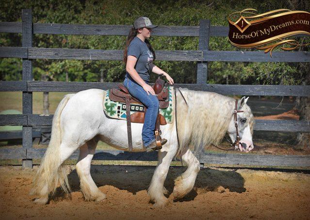 024-Jameson-Gray-white-gypsy-vanner-gelding-for-sale