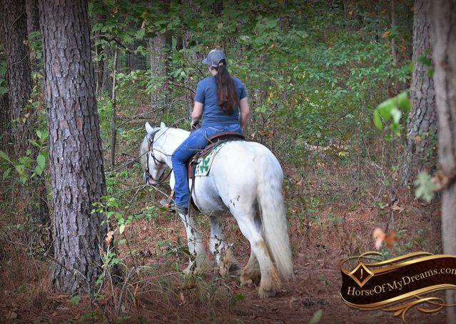 026-Jameson-Gray-white-gypsy-vanner-gelding-for-sale