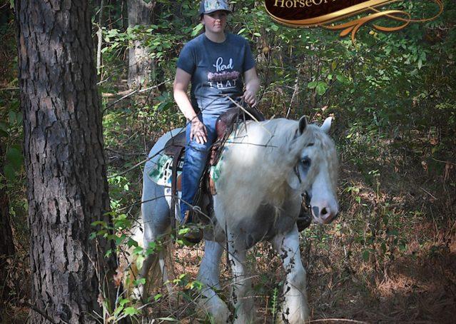 027-Jameson-Gray-white-gypsy-vanner-gelding-for-sale