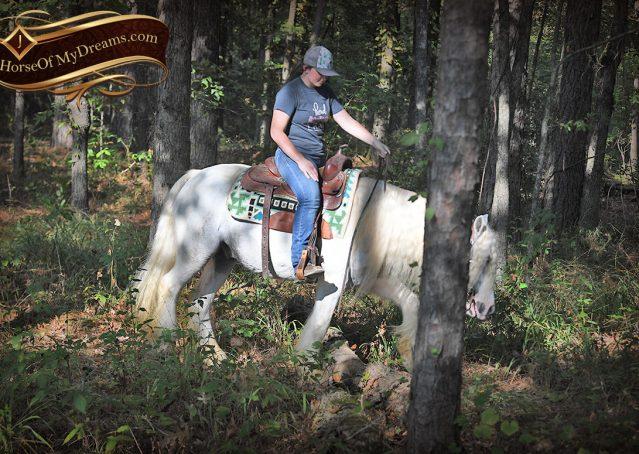 028-Jameson-Gray-white-gypsy-vanner-gelding-for-sale