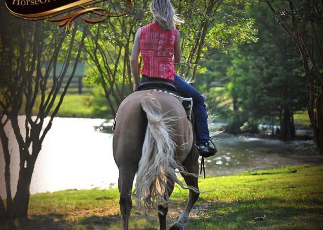 030-Tangle-Golden-Palomino-Flaxen-Blonde-Hollywoodstinseltown-reining-reiner-nrha-gelding-for-sale