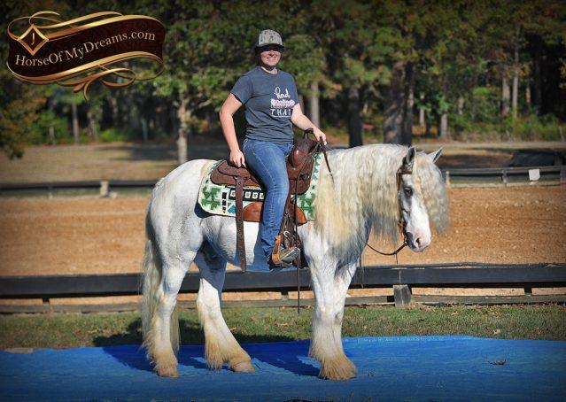 037-Jameson-Gray-white-gypsy-vanner-gelding-for-sale