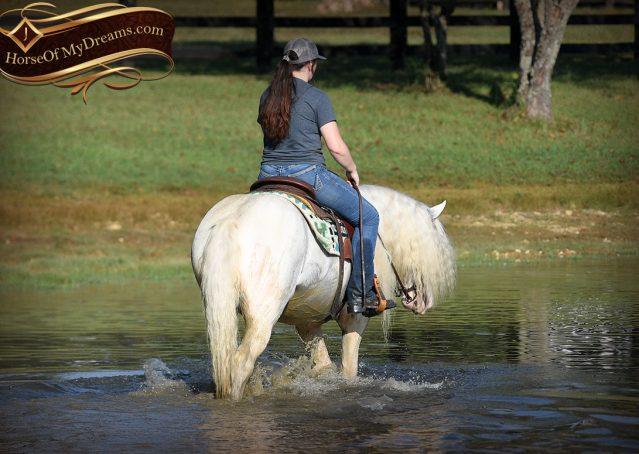 043-Jameson-Gray-white-gypsy-vanner-gelding-for-sale