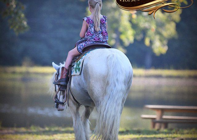 044-Jameson-Gray-white-gypsy-vanner-gelding-for-sale