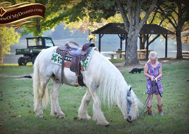 048-Jameson-Gray-white-gypsy-vanner-gelding-for-sale